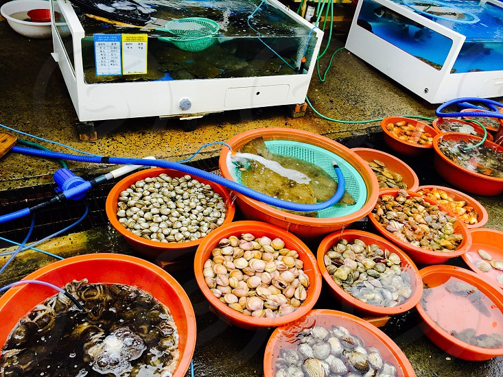 Seafoodseashellsfishfreshtravelingmarketfresh seafoodsfish Aquarium  photo