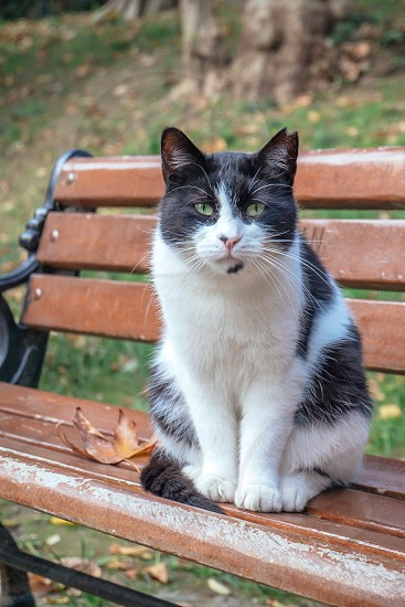 Cat sitting on a bench and leaning forwards towards camera photo