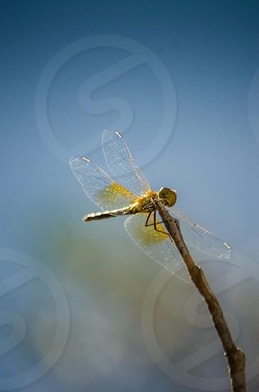 Dragonfly.  photo