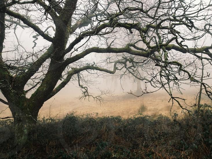 Somerset UK G3 Woodland photo