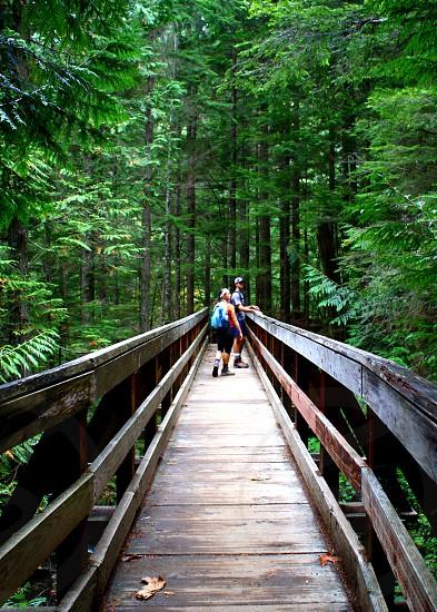 Forest hike trail bridge photo