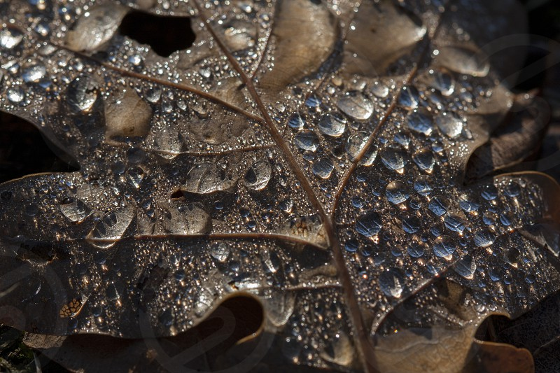 dried leaf with water drops photo