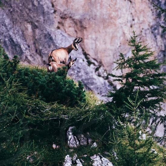 Muontains Alps nature animals photo
