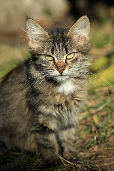 cat and autumn photo