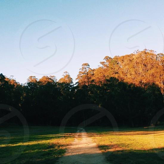 Sunshine on the park pathway photo