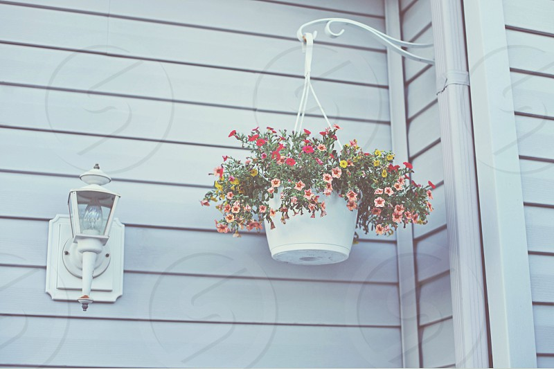flower basket hanging from exterior wall photo