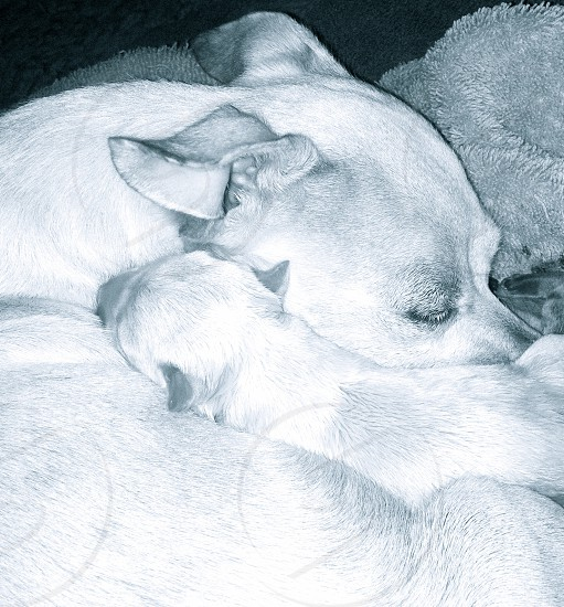 a view of white dog  photo