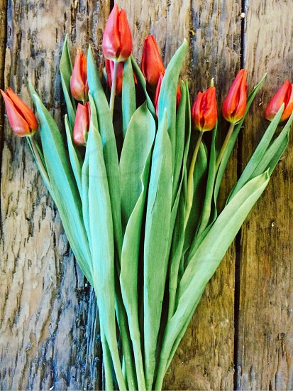 Orange Tulips On Wood photo