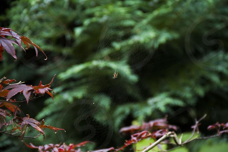 Spider nature web photo