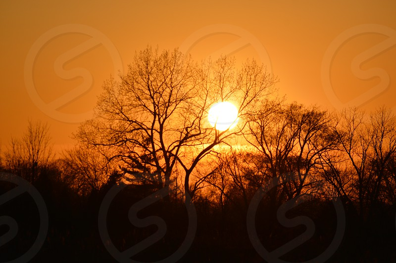 silhouette of bare tree during sunset photo