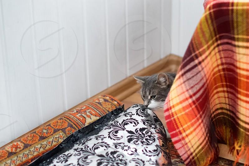 cat hiding behind the plaid textile photo