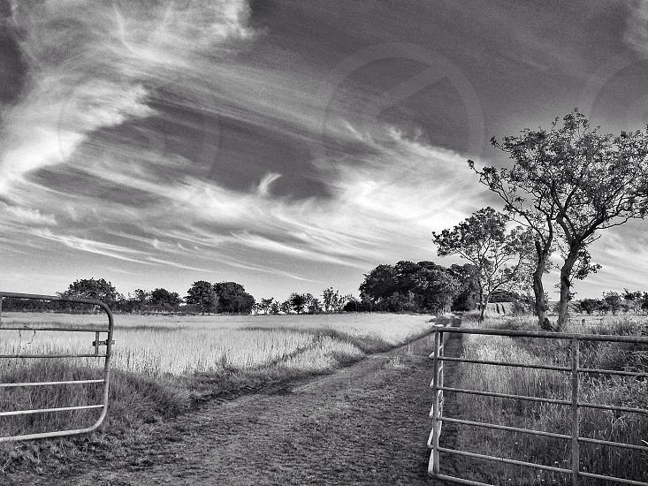 grayscale pathway through a open field with trees on the side  photo