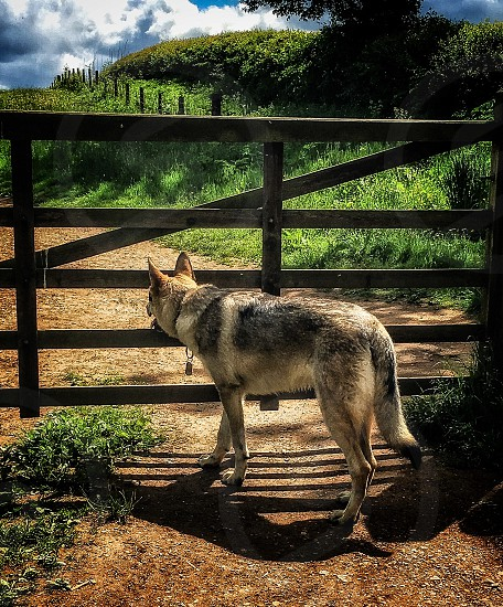 short-coated brown and black dog facing outside the gate under white and blue cloudy skies at daytime photo
