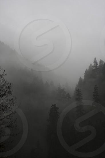 foggy mountain range photo