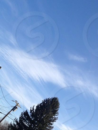 Clouds pine tree photo