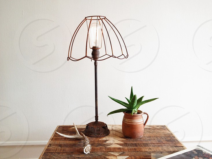 succulent plant photo