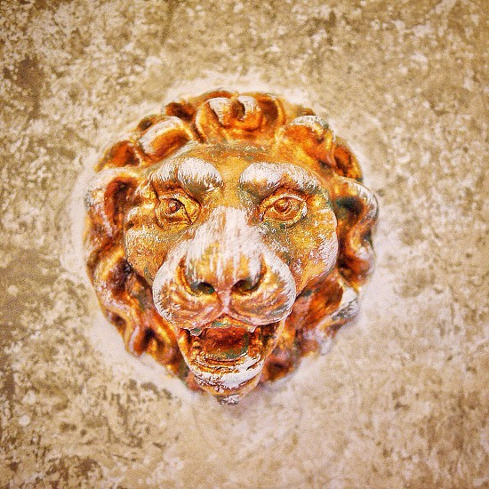 Lion on the wall photo