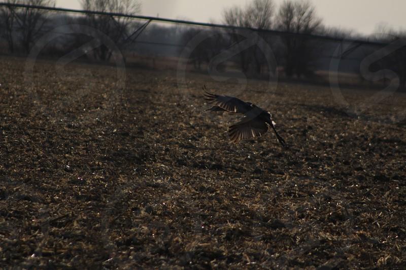 Take off of a Crane photo