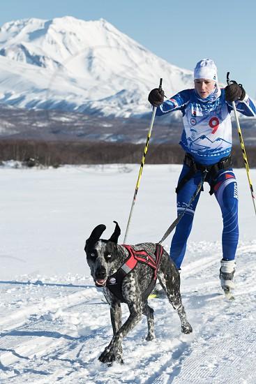 PETROPAVLOVSK KAMCHATKA RUSSIA - DEC 10 2016: Skijor races - competition for Cup of Kamchatka Region on background of Avacha Volcano. Sportswoman skier-racer Saratseva Svetlana and sled dog Roxy. photo