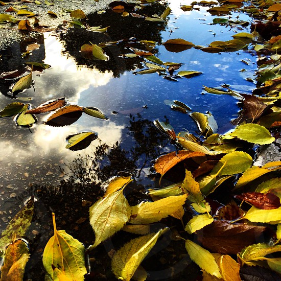 Puddle autumn reflection  photo
