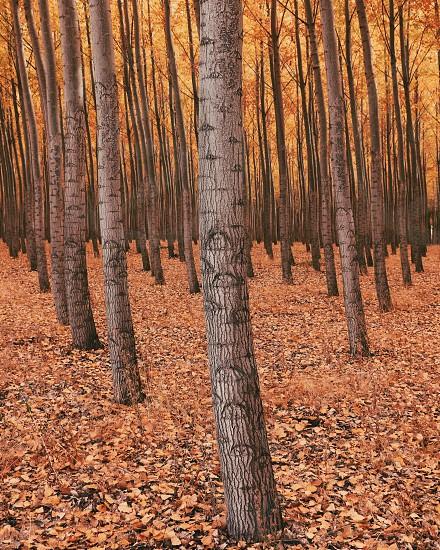 Fall Northwest landscape photo