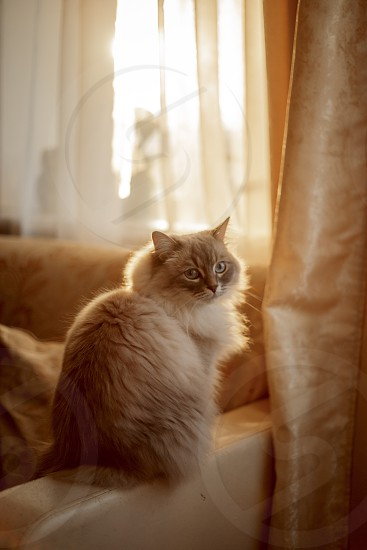 Cat sitting on a chair in sunlight photo