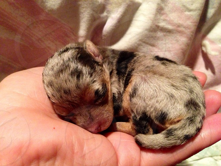 brown newborn puppy photo
