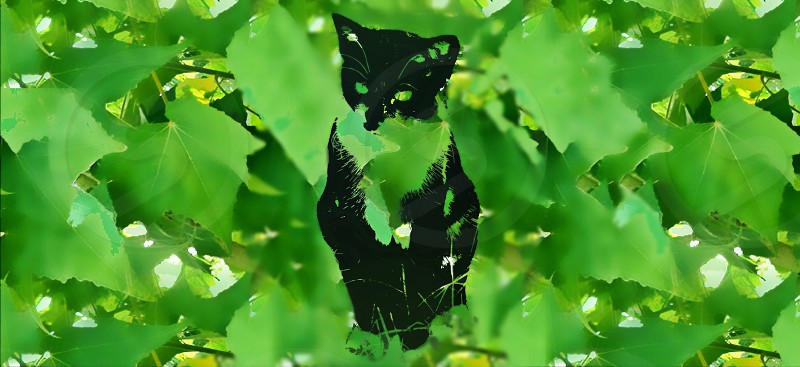 Cat silhouette with green leaf background photo