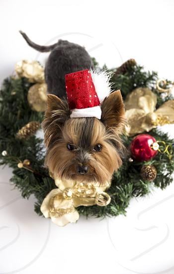 Christmas Xmas new year puppy dog festive  photo