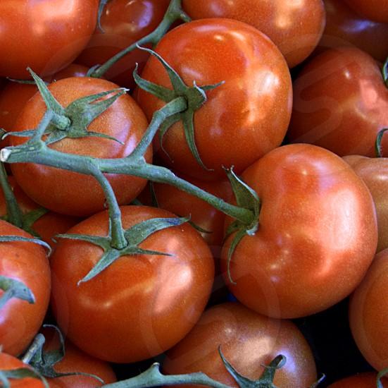 Tomatoes on vine photo