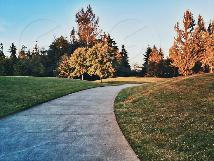 cement pathway through green grass fields with red brown green deciduous trees photo
