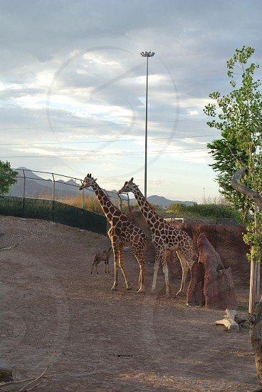 Enjoying looking at the wildlife while at the El Paso Zoo El Paso Texas photo