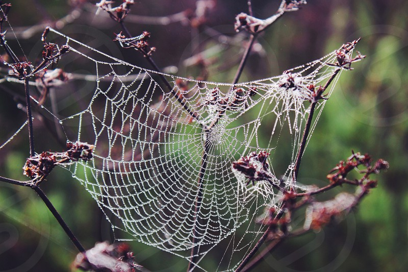 spiderweb covered in dew drops outside photo