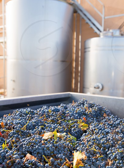cabernet sauvignon vinemaking with grapes and Fermentation stainless steel tanks vessels photo