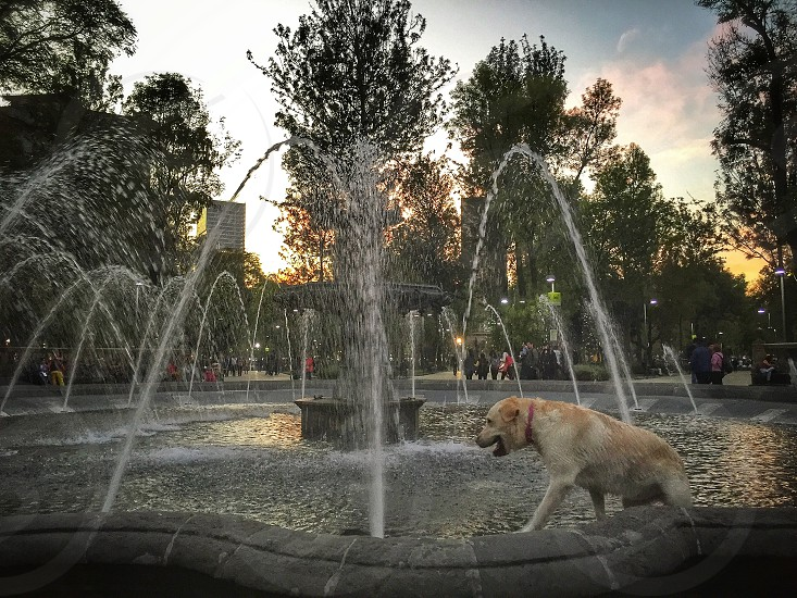 dog; dogs; pet; pets; fun;fountain; playing; wet; happy; happiness; Mexico photo