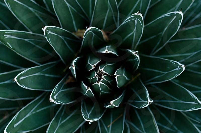 green flower macro photography photo