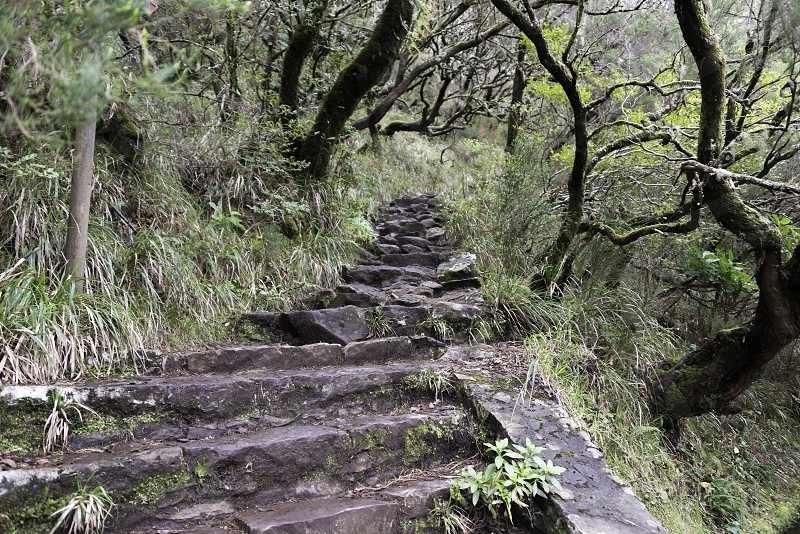 green wild nature on madeira near the 25 fonts levada track photo