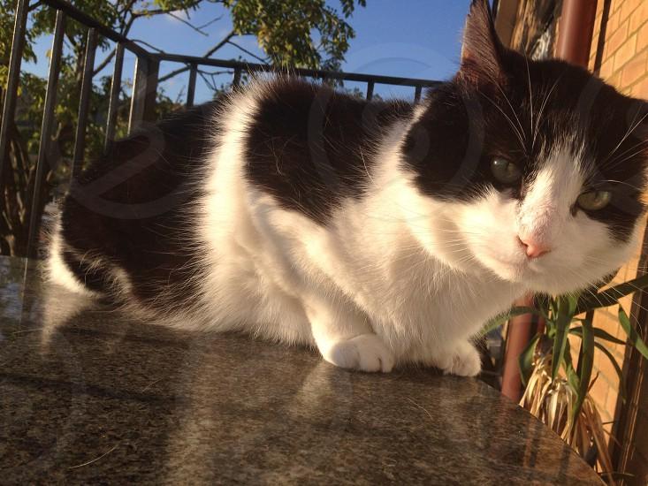 Cat outside sun sunshine  photo