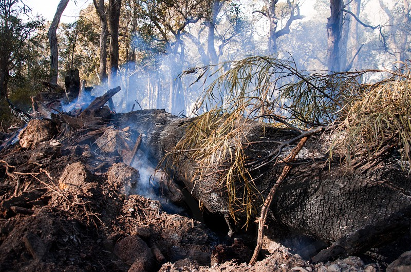 fire and smoke in the forest photo