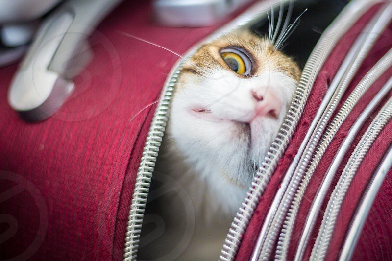 Cat Trolley luggage travel curious  photo