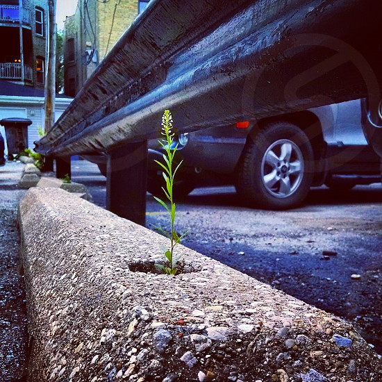 growth green city cement photo