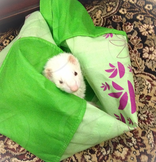 Ferret GO GREEN grocery bag exotic pet silly cute  photo