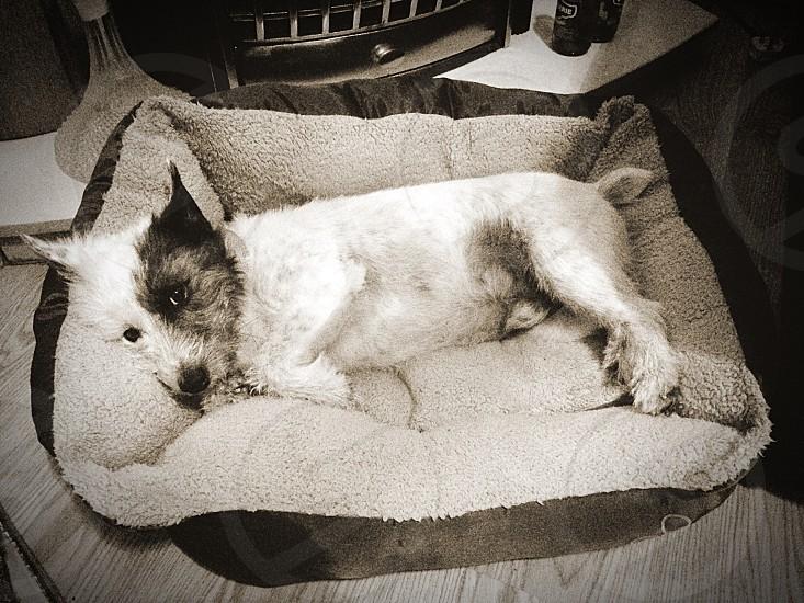Dog; my dog; Billy;  photo