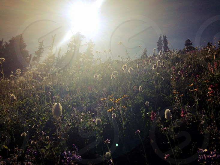 flower garden under the sunlight photo