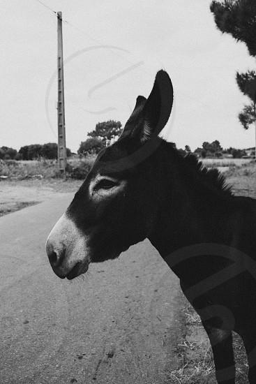 the little donkey photo