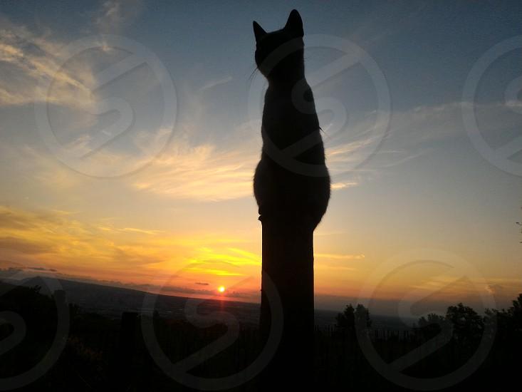 gatto al tramonto photo