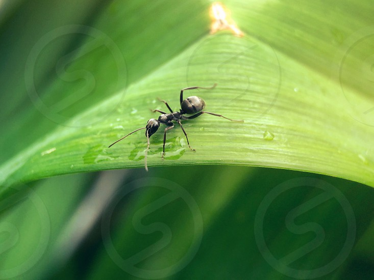 Macro plant nature ant insect green photo