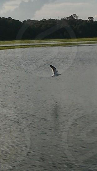 bird in flight over water photo