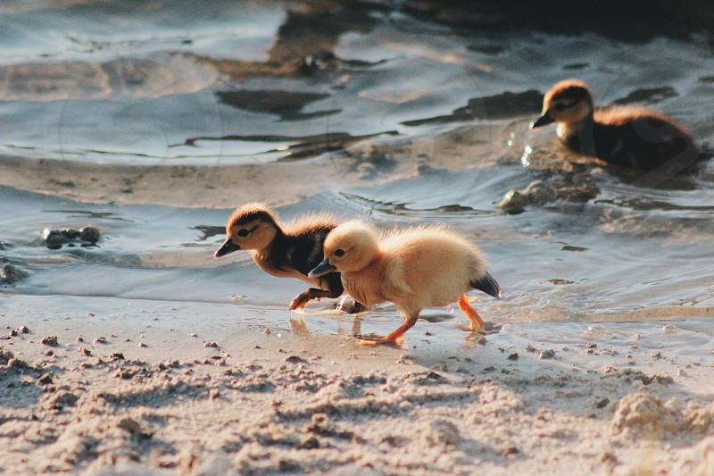 Summer time babies #animals #cute #babies #nature #birds  photo