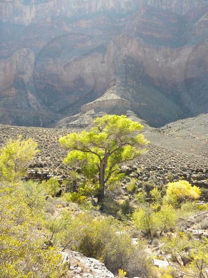 The view inside Grand Canyon.  photo